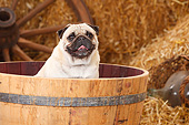 DOG 05 PE0030 01