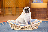 DOG 05 PE0032 01