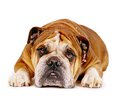 DOG 05 RK0017 05