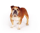 DOG 05 RK0018 01