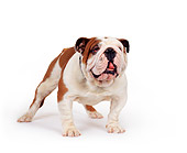 DOG 05 RK0069 02