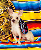 DOG 05 RK0074 06