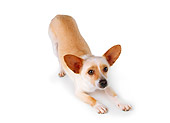 DOG 05 RK0180 03