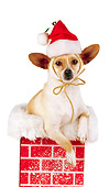 DOG 05 RK0182 07