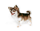 DOG 05 RK0277 01