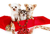 DOG 05 RK0284 01