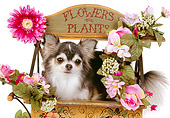 DOG 05 RK0293 07