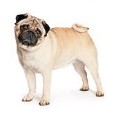 DOG 05 RK0416 01