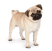 DOG 05 RK0418 01