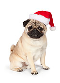 DOG 05 RK0423 01