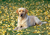 DOG 05 RK0429 01