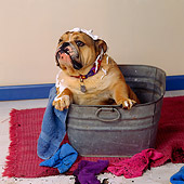 DOG 05 RS0052 02