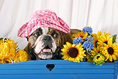 DOG 05 SJ0003 01