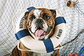 DOG 05 SJ0004 01