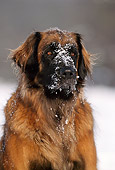 DOG 05 SS0001 01