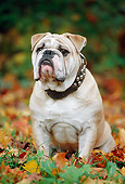 DOG 05 SS0005 01