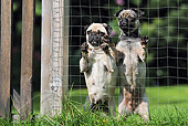 DOG 05 SS0007 01