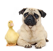DOG 05 XA0001 01