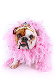 DOG 05 RK0232 01