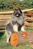 DOG 05 CE0003 01