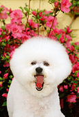 DOG 05 CE0009 01