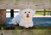 DOG 05 CE0012 01