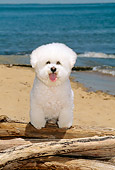 DOG 05 CE0013 01