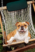 DOG 05 CE0017 01