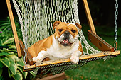 DOG 05 CE0018 01