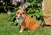 DOG 05 CE0019 01