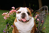 DOG 05 CE0021 01