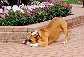 DOG 05 CE0022 01