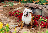 DOG 05 CE0024 01