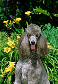 DOG 05 CE0028 01