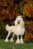 DOG 05 CE0032 01