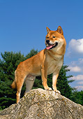 DOG 05 CE0036 01