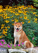 DOG 05 CE0038 01