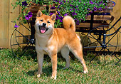 DOG 05 CE0039 01