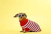 DOG 05 DC0021 01