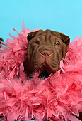 DOG 05 DC0037 01