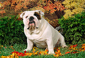 DOG 05 FA0001 01