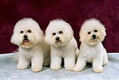DOG 05 FA0004 01