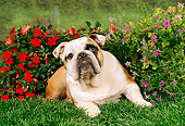 DOG 05 FA0007 01