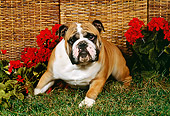 DOG 05 FA0009 01