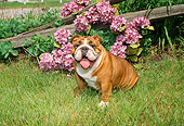 DOG 05 FA0013 01