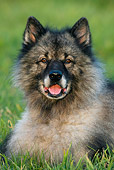 DOG 05 KH0006 01
