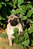 DOG 05 LS0002 01