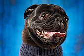 DOG 05 MQ0001 01