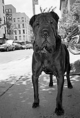 DOG 05 MQ0035 01