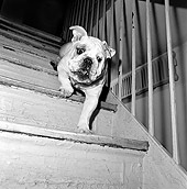 DOG 05 MQ0042 01